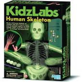 4M Ανθρώπινος Σκελετός