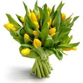 Στο φως του Ήλιου Μπουκέτο από πανέμορφες κίτρινες τουλίπες