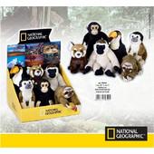 National Geographic Λούτρινα Ζωάκια Μωρά Τροπικό Δάσος 17εκ 770701