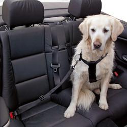 c710993f7b2f Ζώνη Ασφάλειας Σκύλου Γάτας Περ.Στήθους 30 έως 60εκ