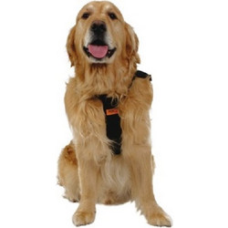 Dog Car Harness XLarge (RACPB15)